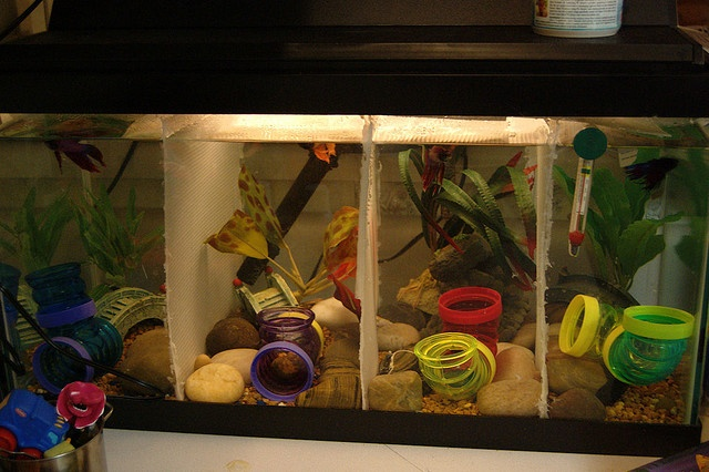 Another past tank - a 15 gallon divided 4 ways with plastic canvas mesh.  Canvas mesh also on top to prevent jumps.  Each section has caves, a plant and hamster tubes - many bettas I've owned have loved playing in the tubes.