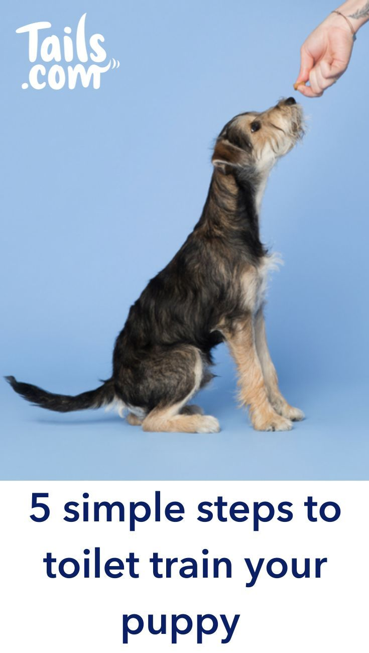 If You Re Wondering How To Succeed When House Training A Puppy We Re Here To Help Having Gone Through Our Fair Share Of It In The Tails C In 2020 Puppy Toilet Training