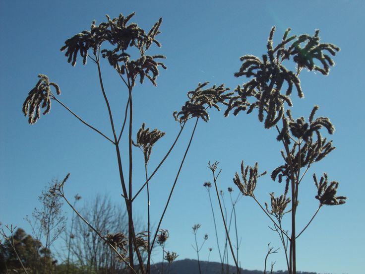 Summer grasses 2011