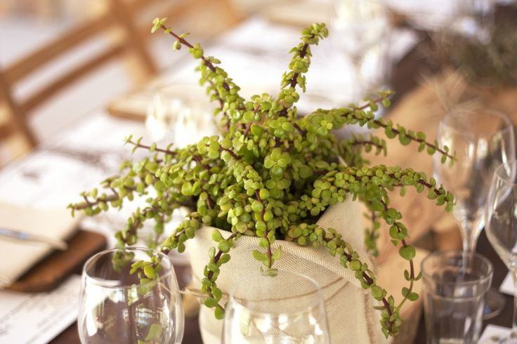 Fynbos Food Experience « Caro de Waal EAT+DESIGN+EXPERIENCE