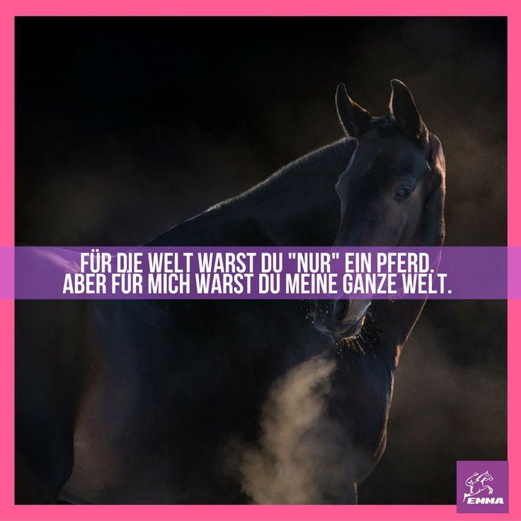 Für die Welt wrst du nur ein Pferd….