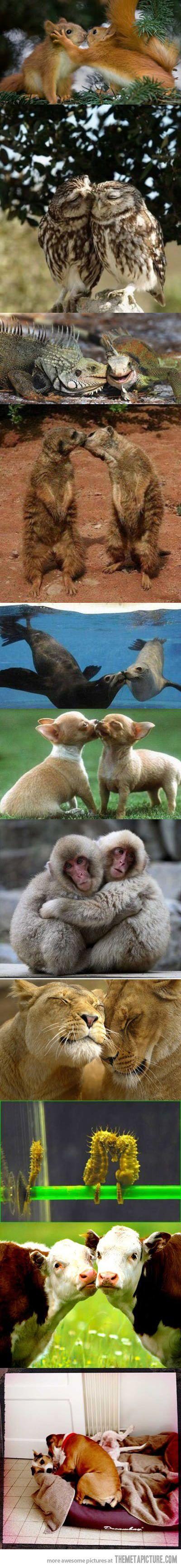 Love in nature
