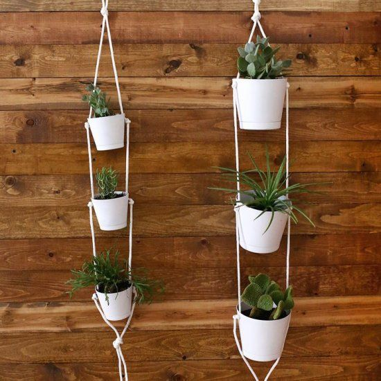 18 Best Hanging Orchids Images On Pinterest