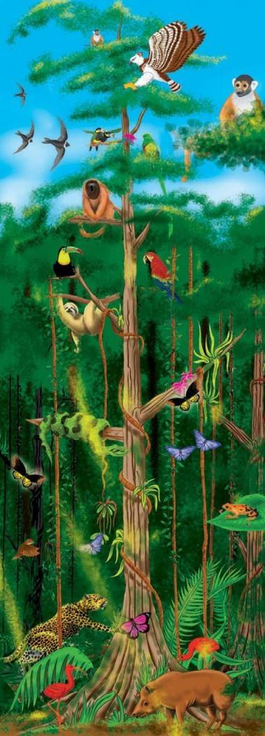 hier zie je een paar dieren uit het tropisch regenwoud