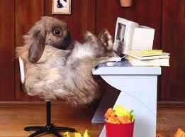 Even the Easter Bunny needs his home office custom-designed to combine style and innovation with sensible functionality.
