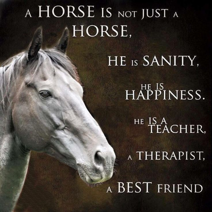 My horse is my therapy, when I can't even stand myself he brings the balance back! Then I can breathe again!