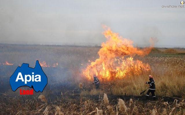 Fermierii care utilizează teren arabil (inclusiv pajişti temporare) nu trebuie să ardă miriştile şi/sau resturile vegetale, rezultate după r...