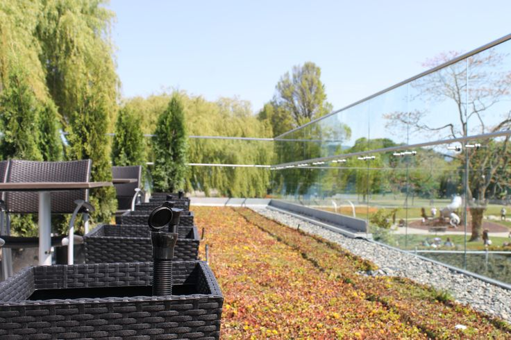 Ollie Plant Sippers all lined up in their new homes next to a beautiful greenroof. Boathouse Kits rooftop patio.