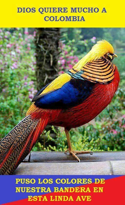 "What an amazing ""colombian"" bird!"