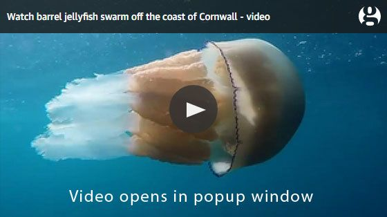 Jellyfish video link - If you spot jellyfish, basking sharks or sea turtles, then let us know - Marine Conservation Society (MCS) – the UK's leading marine charity. To make sure we can all enjoy our fantastic marine life and amazing habitats for generations to come, find out why marine protected areas are so important.