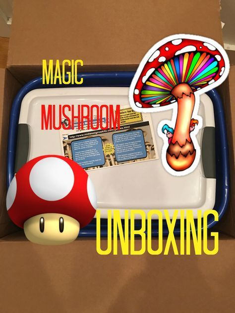 Midwest Ultimate Magic Mushroom Grow Kit Unboxing and Review #mushroomkit