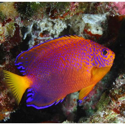 1000 images about fish saltwater on pinterest for Exotic saltwater fish