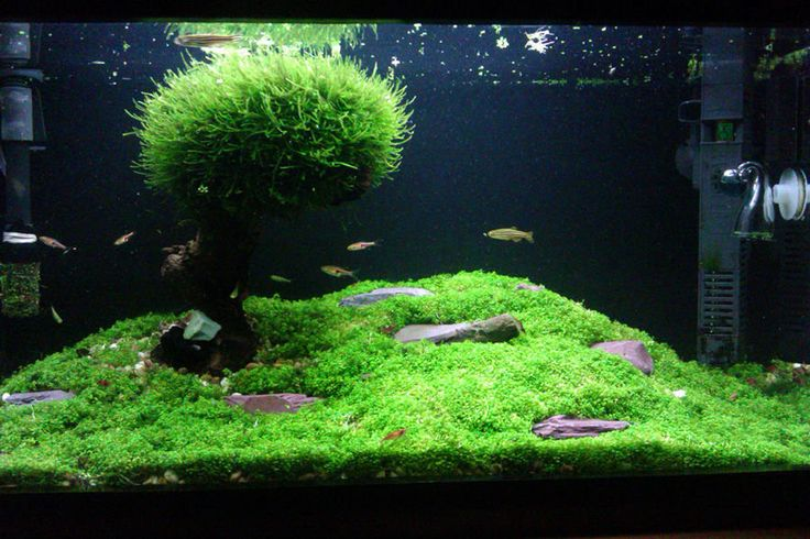 17 best images about aquascapes on pinterest rock and Aquarium landscape