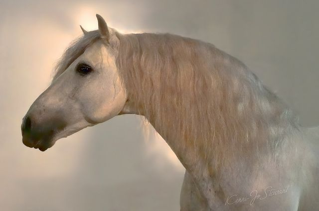 Andalusian by Kerri-Jo on Flickr.
