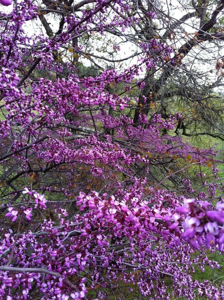 103 Best Images About My Utah Flower Garden On Pinterest