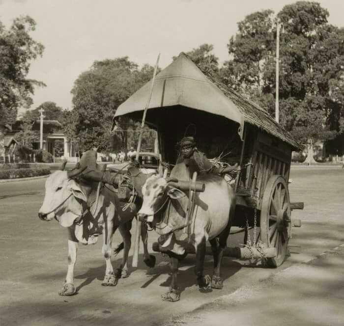 Pedati, Semarang 1945 - 1955