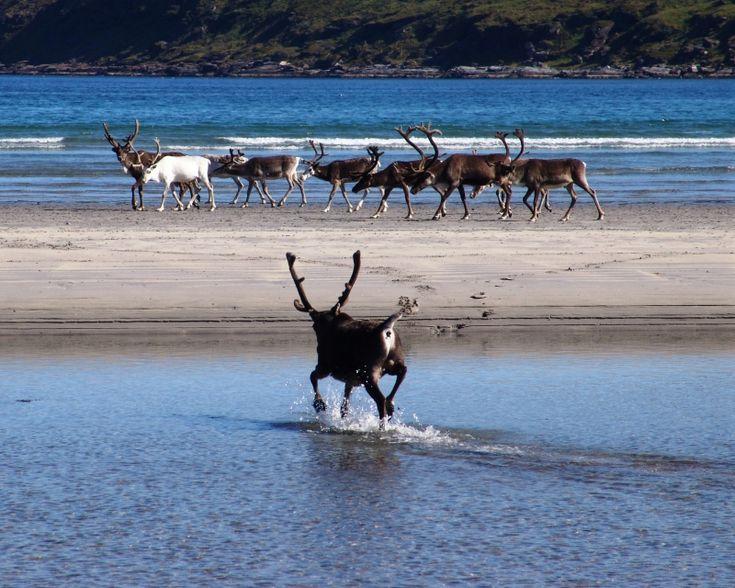 #FINLANDIA Un coinvolgente viaggio fra orsi, lupi, renne e linci, fra canyon creati dall'ultima era glaciale, il sole di mezzanotte, le saune finlandesi e la taiga sconfinata. #ecoturismo #travel