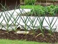 jakou zeleninu lze pestovat v zime