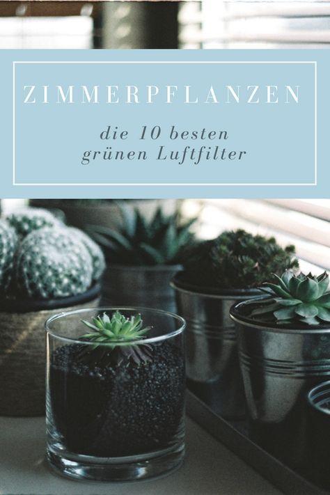 250 Best Images About Zimmerpflanzen On Pinterest | Ficus Elastica ... Grune Zimmer Pflanzen Schoner Indoor Garten
