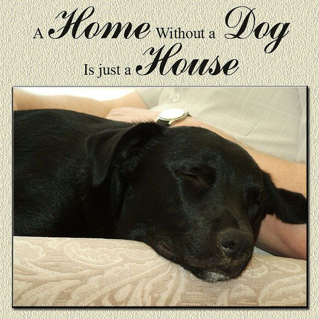 A home without a dog is just a house.