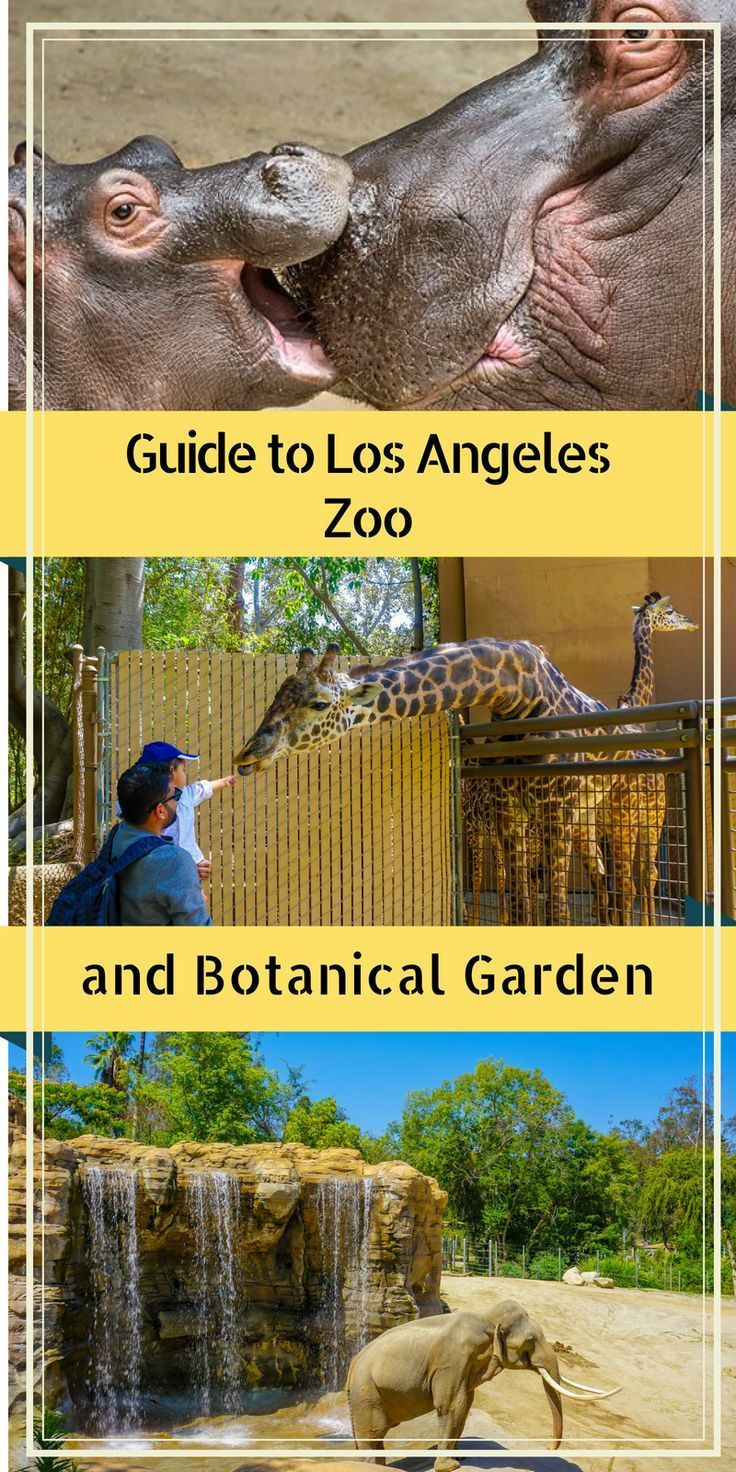 Guide To The Los Angeles And Botanical Garden Eazynazy Los Angeles Zoo Botanical Gardens Los Angeles