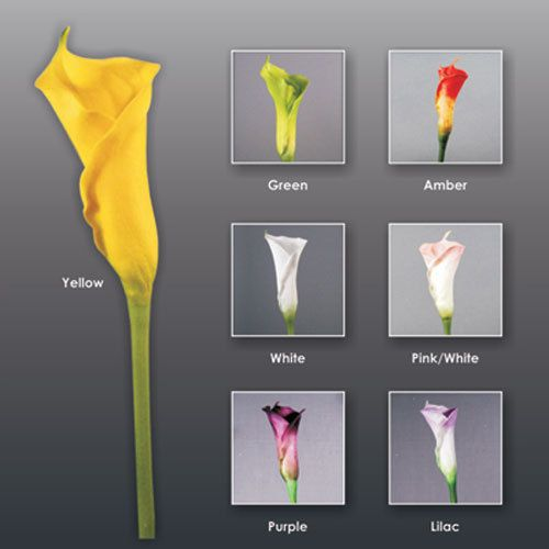 Flowers-by-Design.com - Real Touch (Floramatique) MEDIUM Calla Lily BUD, $4.00 (http://www.flowers-by-design.com/real-touch-floramatique-medium-calla-lily-bud/)