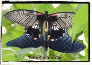 Mémoires Visuelles: Le Porte Queue d'Asie http://evasionqc.blogspot.ca/2013/03/le-porte-queue-dasie.html