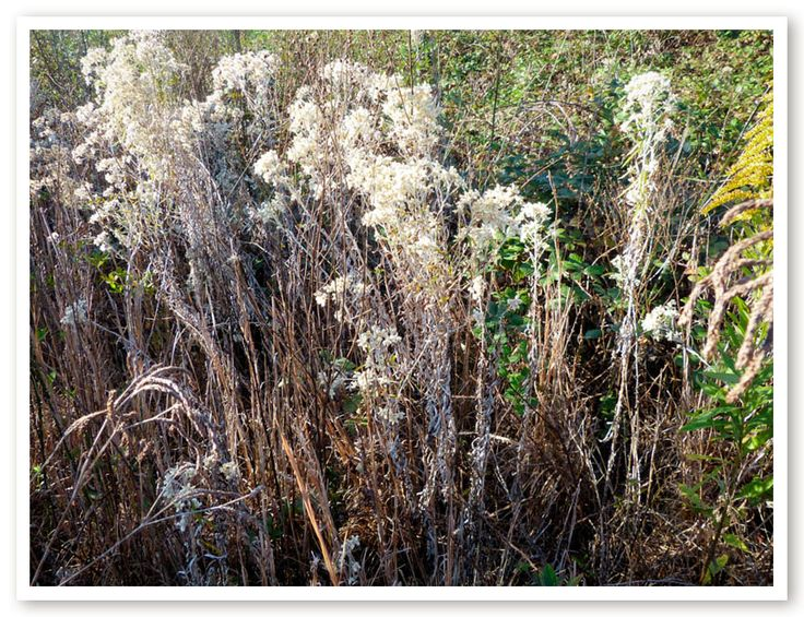 NATIVE AMERICAN  herbal remedies for nasal congestion (1 of 62)