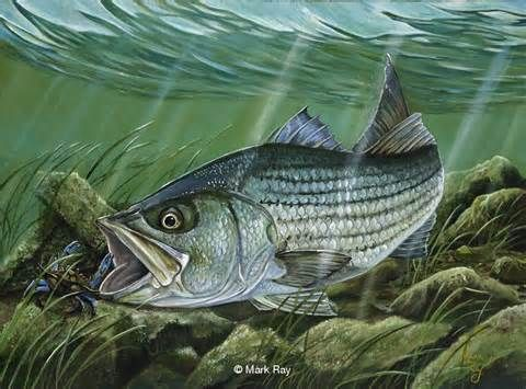 26 best on the water images on pinterest fish art fish for Bass fishing art