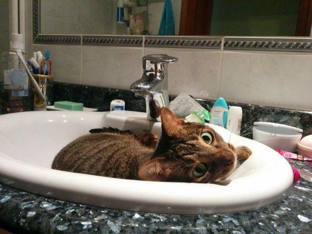 Un bañito de espuma ya me daras no?