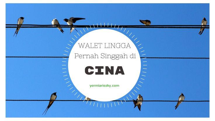 Ekspor sarang burung walet pernah jaya di Lingga, Kepulauan Riau.