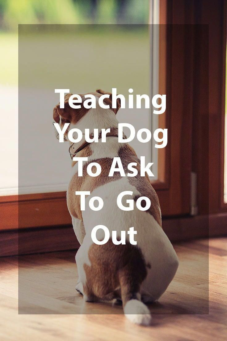 Train Your Dog To Use A Potty Bell To Go Outside Training Your Dog Dog Training Training Your Puppy