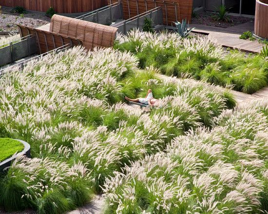 stunning mass planting.  tall grasses as turf substitute--bench snuggled into meadow.  Landscape Design by Dale Jones-Evans