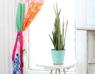 Snake plants, also know as mother-in-law's tongue or sansevieria, have become increasingly popular, and rightly so. With their striking lines and hardiness, they're the houseplants even black thumbs can show off. They also act as air purifiers to improve your home's air quality. Here's how to keep them happiest.