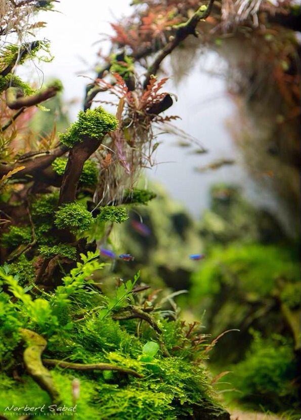 Aquarium Aquarium Pinterest Aquariums Aquarium Ideas And Planted Aquarium