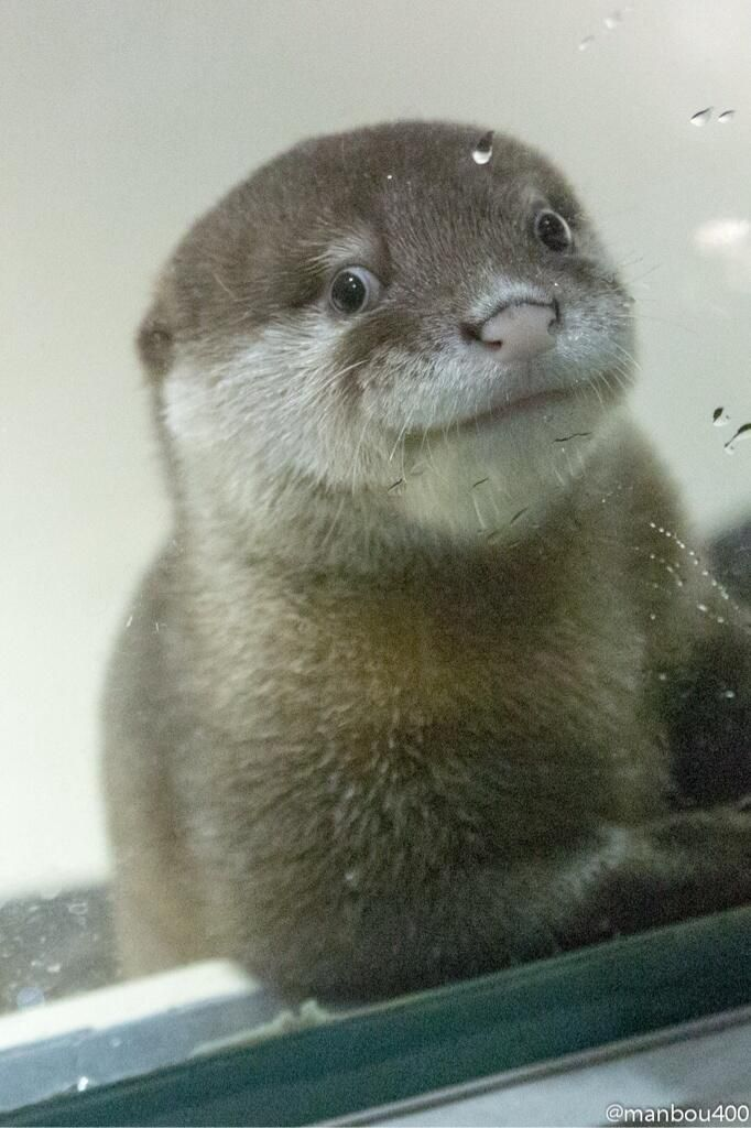 Otter pup ... look at that smile!
