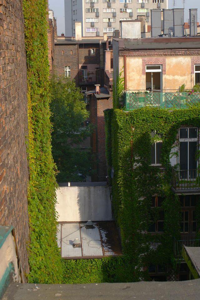 podwórka przy ul. Moniuszki