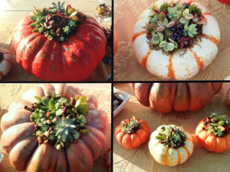 These Are Real Pumpkin With Succulents Arrangements Home