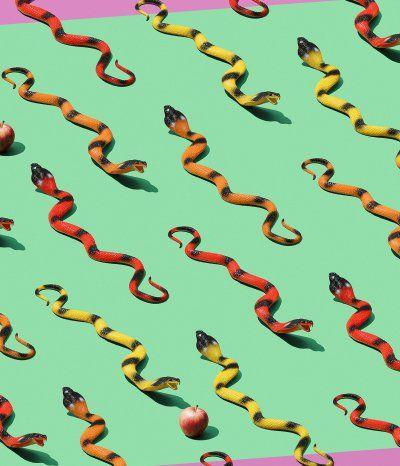 So many snakes..... Shot by Chris Robinson