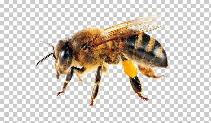 Western Honey Bee Swarming Beehive Forage Png Apiary Ari Arthropod Bee Beehive Honey Bee Cartoon Honey Illustration Beehive Drawing