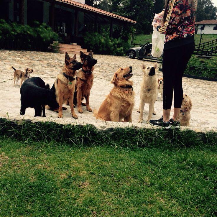 Dog herd happy life