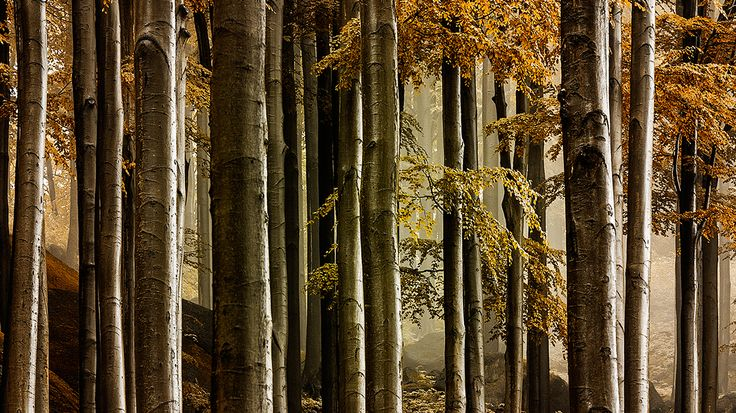 https://www.behance.net/gallery/11252115/My-Beech-Forest