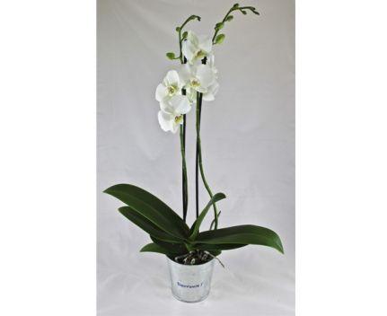 Orchidée personnalisé en image