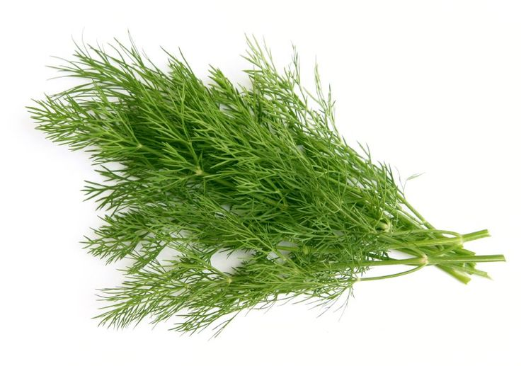 STOP THE SPREAD OF CANCER CELLS? | Dill is a wonderful herb to include in your daily toolkit for stopping / preventing the spread of cancerous cells. Dill contains monoterpenes, which hone in and minimize cancer cell growth. Fresh organic Dill from the produce department is the way to go and you'll need to use more than just a sprinkle. Dill can be added to salads, veggies, and juices alike. Dill also helps w/ insomnia and helps alleviate symptoms of the common cold. This aromatic herb is…