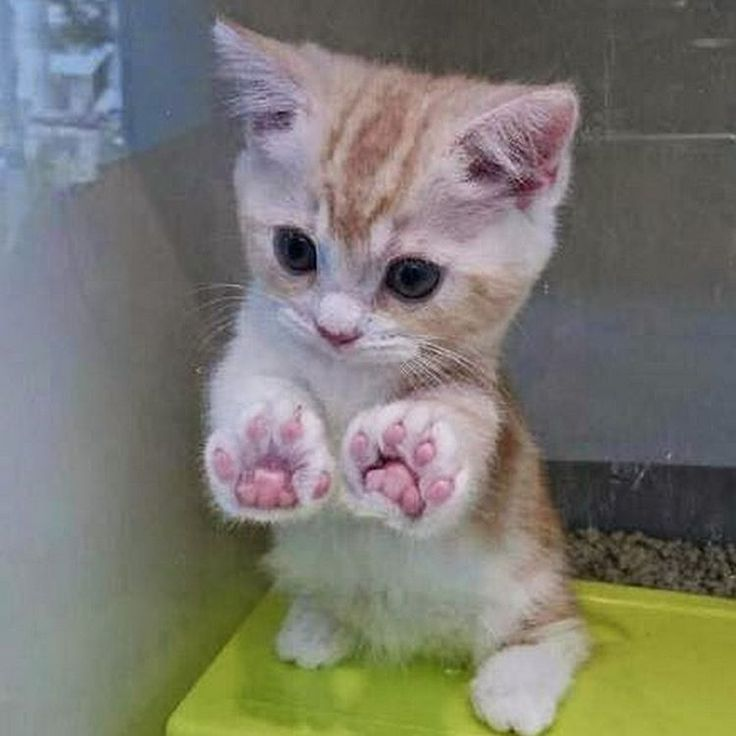 Awwww, check out this little cutie with his jellybean toes !!