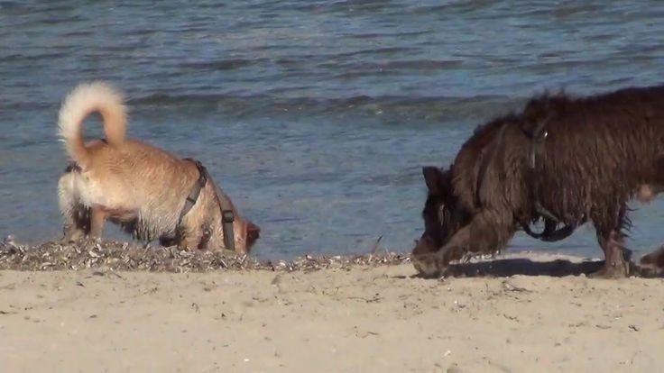 Испания. Лягушатник на пляже Постигет в Аликанте в зимний период.