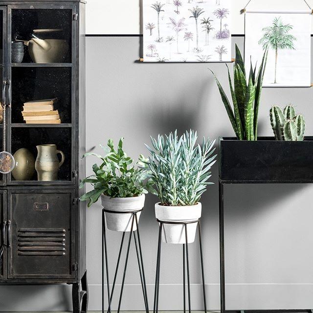 Maison Belle ❤ Kamerplanten standaard @karwei KARWEI | Interieur BASICS