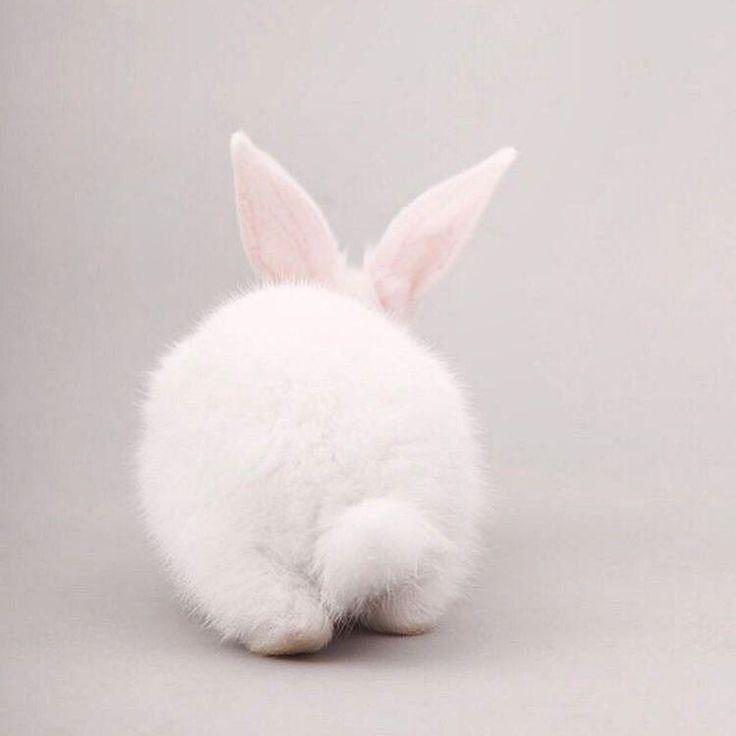 #petstagram #rabbitstagram #bunniesofinstagram #rabbits #rabbitsofinstagram #housebunny #bunnyrabbit #rabbit #houserabbitsociety #bunniesworldwide #houserabbit #bunnies #minilop #eastereggs #lovebunny #pet #easteregg #lionhead #petsofinstagram #bunny # #bunnylove #pets #lapin #instapet #easter #instabunny by hvid.kanin