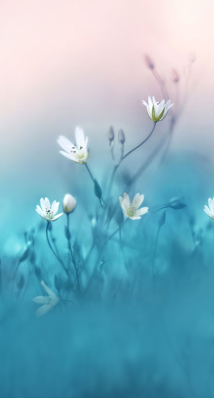 Zerbrechlicher Abschluss der weißen Blume oben
