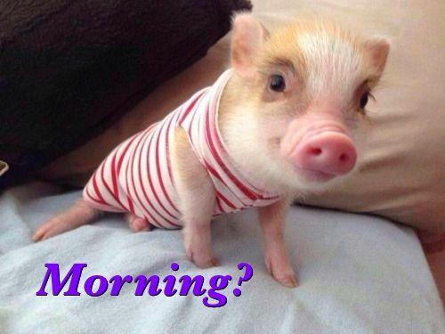 Good Morning ☺️